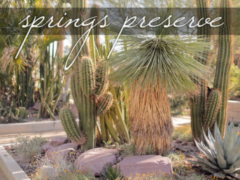 Springs Preserve Las Vegas.