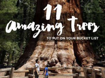 11 Most Amazing Trees to Put on Your Bucket List.