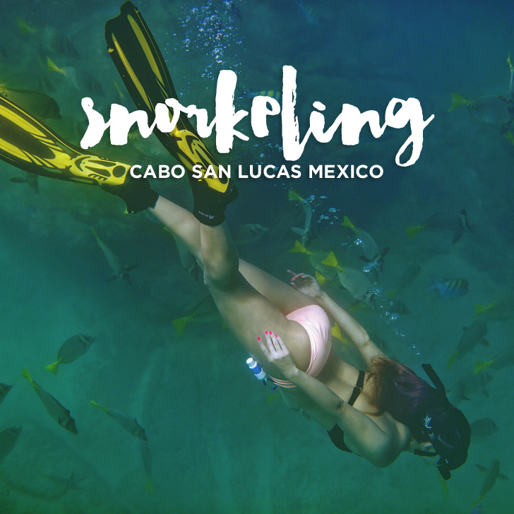 How to Go Snorkeling in Cabo San Lucas