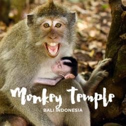Uluwatu Temple Monkeys in Bali Indonesia