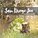 San Diego Wild Animal Park – Run Cheetah Run!