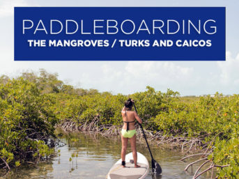 Stand Up Paddle Boarding through the Mangroves with Big Blue Unlimited (Best Things to Do in Turks and Caicos).