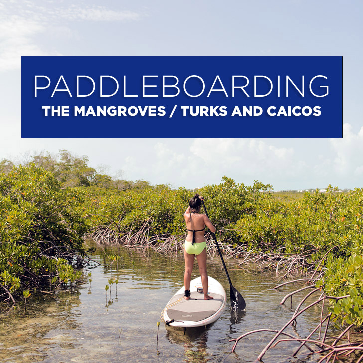 Baby Sharks! / Stand Up Paddle Boarding the Mangroves