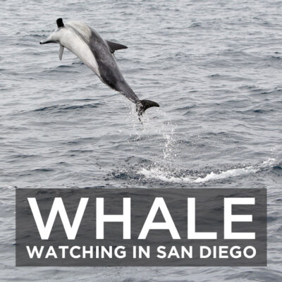 Whale Watching San Diego with Pacific Nature Tours.