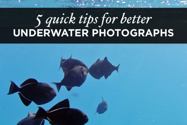 5 Quick Underwater Photography Tips for Better Travel Photos.