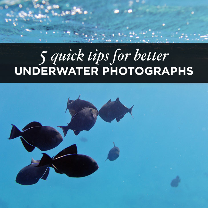 5 Quick Underwater Photography Tips For Better Travel Photos