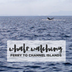 Channel Islands Whale Watching with Island Packers
