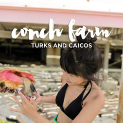 Visiting the Only Conch Farm in the World in Turks and Caicos