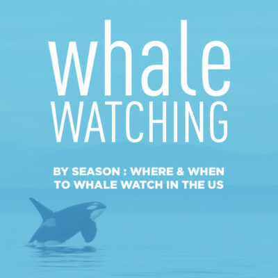 Whale watching in the us archives local adventurer for Best places to travel in october in the us