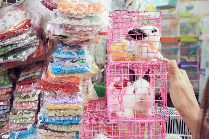 Chatuchak Weekend Market Bangkok Thailand (25 Best Markets in the World to Add to Your Bucket List).