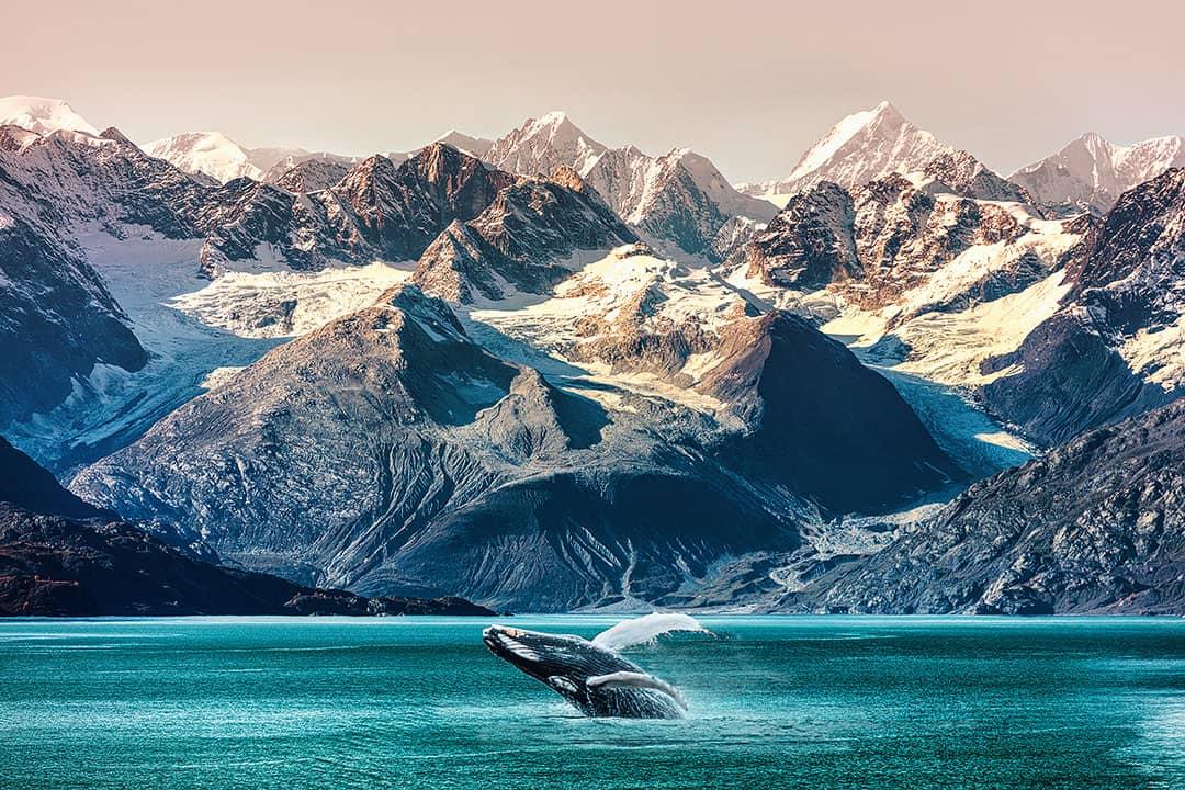 glacier bay whale watching alaska