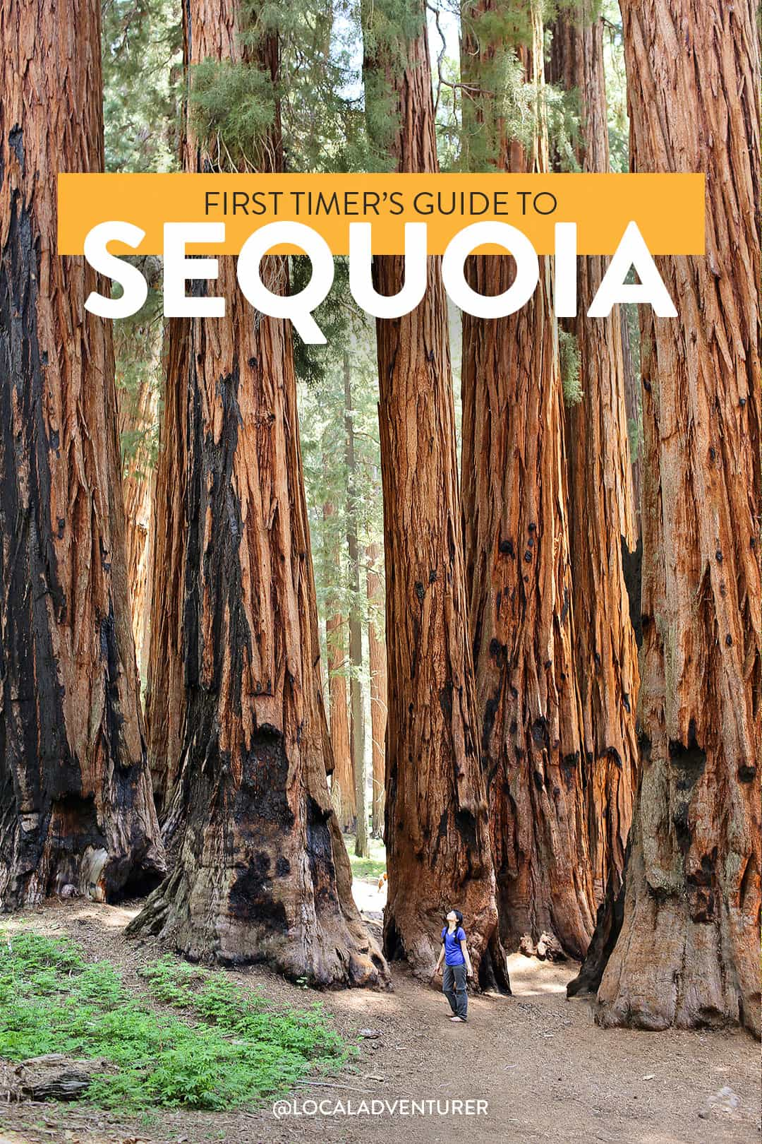 15 Incredible Things to Do in Sequoia National Park California