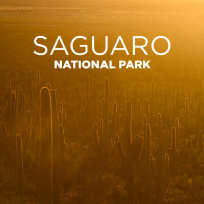 Your Guide to Saguaro National Park.