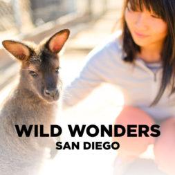 Meet the Animal Ambassadors of Wild Wonders Bonsall CA