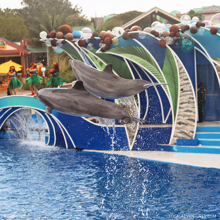 Dolphins at SeaWorld San Diego.