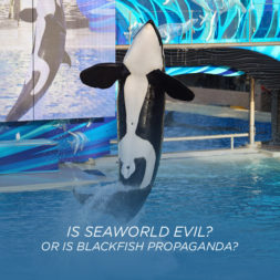 Is SeaWorld Evil or is Blackfish Propaganda?
