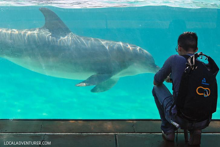 Dolphins at SeaWorld SanDiego.