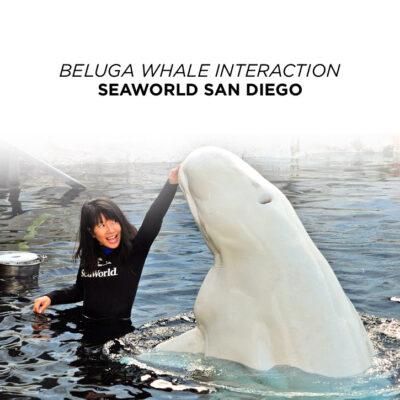 Beluga Interaction Seaworld San Diego.