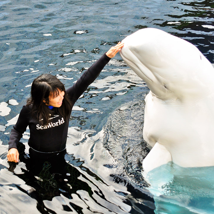 Beluga Interaction Program SeaWorld San Diego