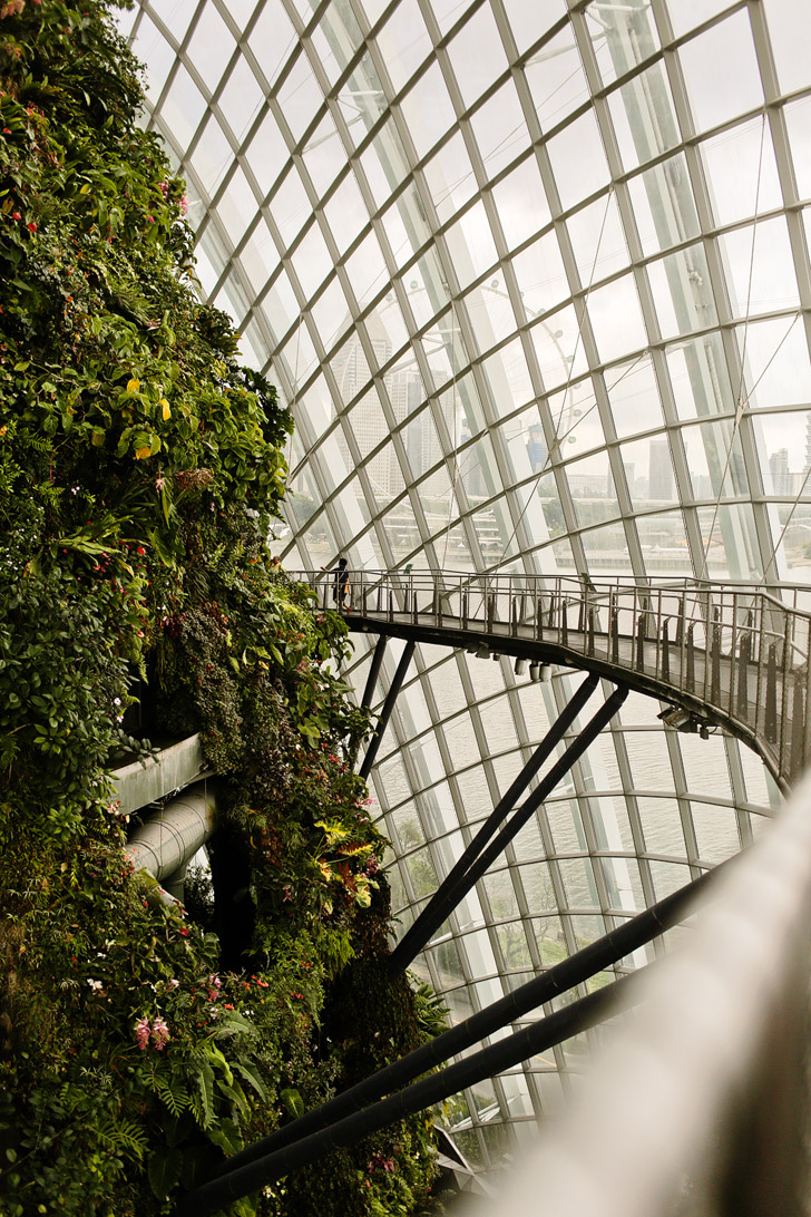 Cloud Forest Gardens By the Bay Singapore.