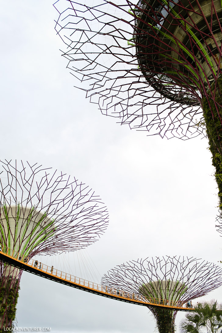 Supertree Grove Gardens by the Bay Singapore