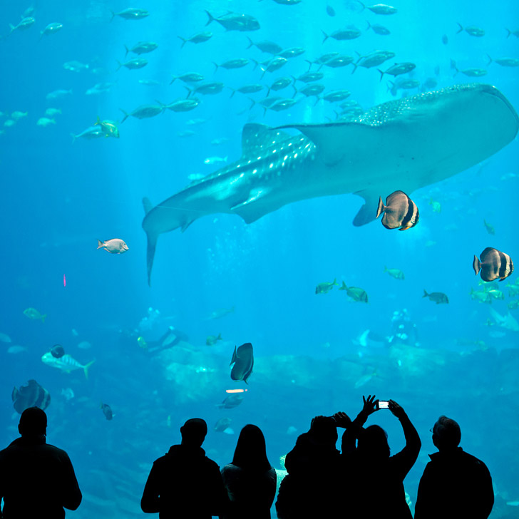The Georgia Aquarium is the largest aquarium in the world (101 Things to Do in Atlanta).