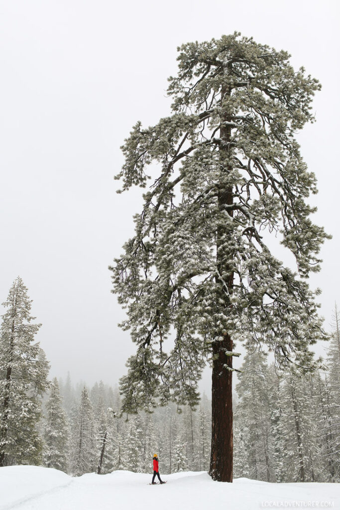 Things to Do in Yosemite Winter Activities - Snowshoeing at Badger Pass // localadventurer.com