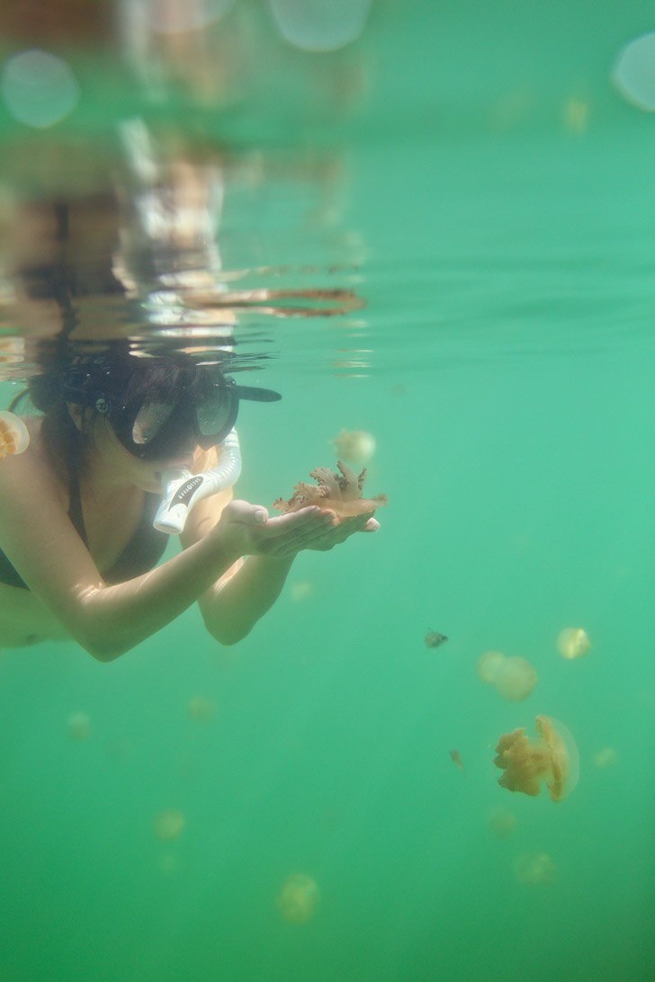 Swimming with Stingless Jellyfish at a Jellyfish Lagoon in Derawan Islands Indonesia - There are only two places in the world where you can do this! // localadventurer.com