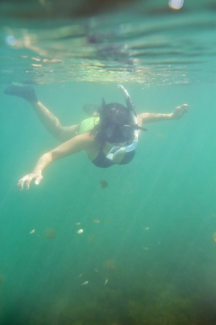 Swimming with Jellyfish That Don't Sting at a Jellyfish Lake Indonesia - There are only two places in the world where you can do this - Palau and Kakaban Island // localadventurer.com