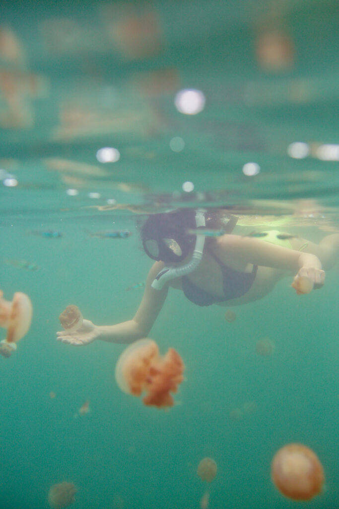 Swimming with Jellyfish that Don't Sting at Jellyfish Lake Indonesia - They evolved to lose their stingers after the lagoon separated from the ocean // localadventurer.com