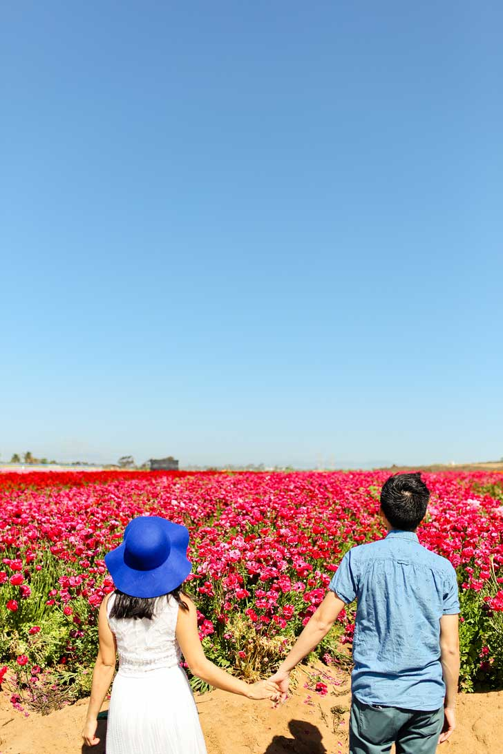 The Flower Fields Carlsbad Ranch // localadventurer.com