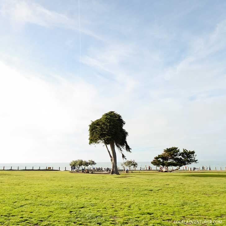 Truffula Tree in La Jolla + 13 Best Instagram Spots in San Diego // localadventurer.com