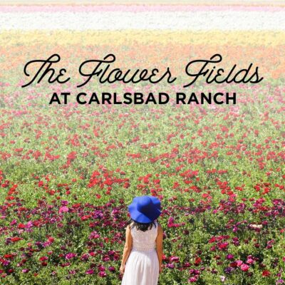 It's Ranunculus Season at the Carlsbad Flower Fields // localadventurer.com