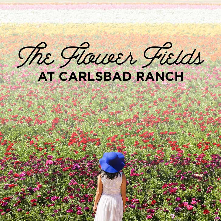 Your Guide to the Carlsbad Ranch Flower Fields