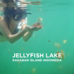 Swimming with Stingless Jellyfish in Jellyfish Lake Kakaban
