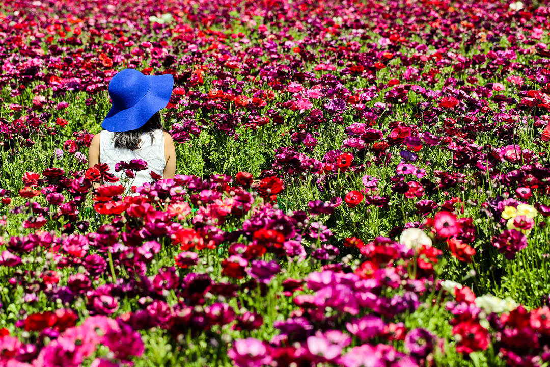 Beautiful California Wildflowers and Flower Fields You Must Visit This Spring