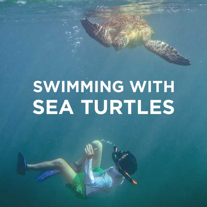 Swimming with Dozens of Endangered Sea Turtles in Indonesia