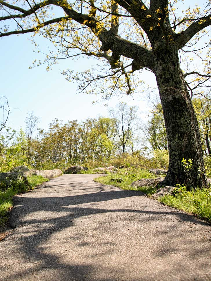 Hiking in Kennesaw Mountain National Battlefield State Park (Free Things to Do in Atlanta) // localadventurer.com