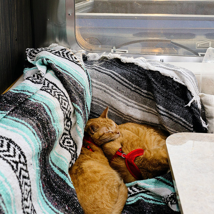 Catventurers Move into an Airstream on the Endless Caravan // localadventurer.com