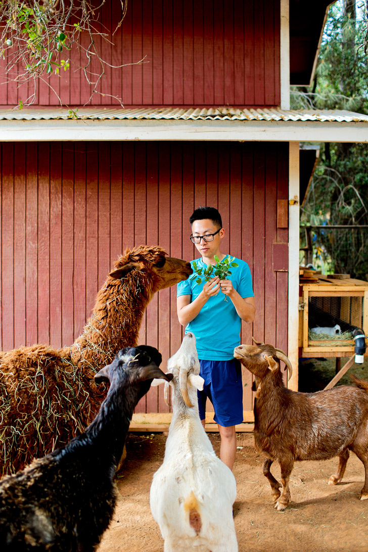 Yosemite Pines RV Park - They even have a petting zoo! // localadventurer.com
