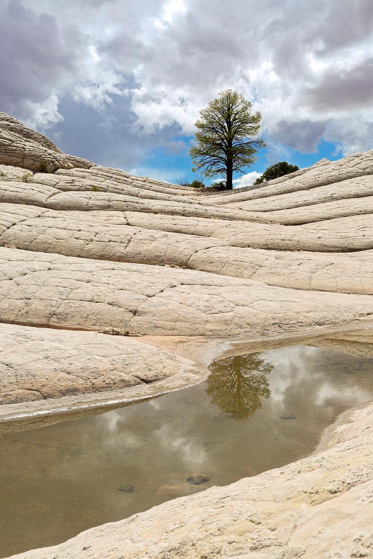 White Pocket AZ - Sandstone Formations in Vermilion Cliffs National Monument near the border of Utah and Arizona // localadventurer.com