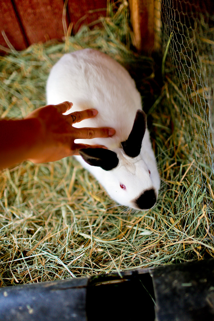 Petting Zoo - Yosemite Pines RV Resort & Family Lodging California USA // localadventurer.com