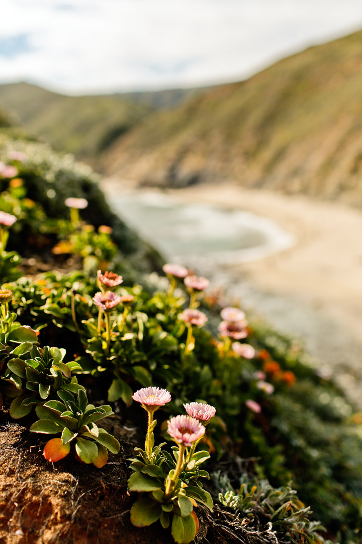 Pfeiffer Beach Big Sur California - famously known for its unique purple sand // localadventurer.com