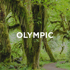 Olympic National Park Guide // localadventurer.com
