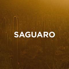 Saguaro National Park Guide // localadventurer.com