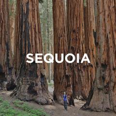 Sequoia National Park Guide // localadventurer.com