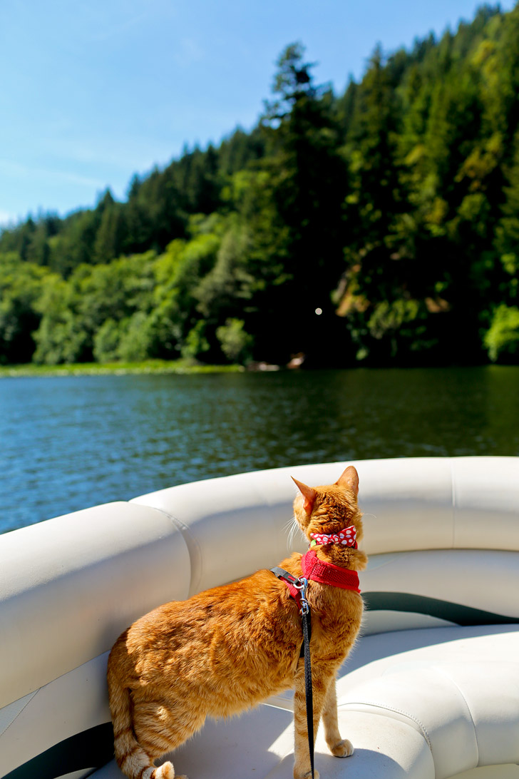 Adventurecats at Loon Lake Oregon USA // localadventurer.com