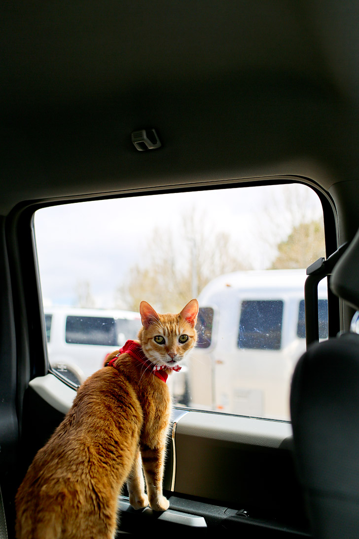 Tips for RVing with Cats // localadventurer.com