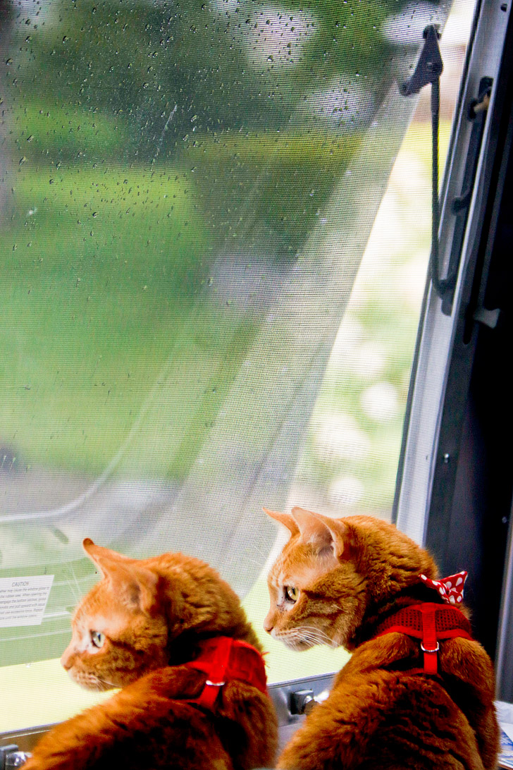 Essential Guide for RVing with Cats // localadventurer.com