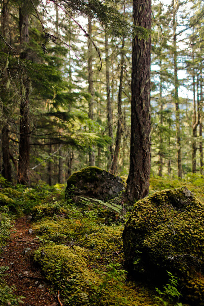 Happy Creek Trail - Day Hiking North Cascades National Park WA USA // localadventurer.com